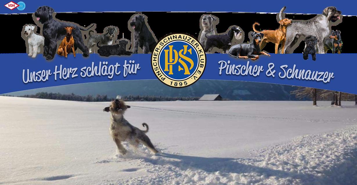 Pinscher-Schnauzer-Klub Landesgruppe Bayern